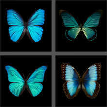 Butterfly Grid blue