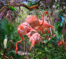 Lost Flamingos and Some Acquaintances