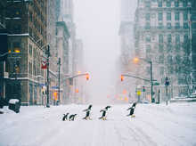 NYC Penguins - Part II